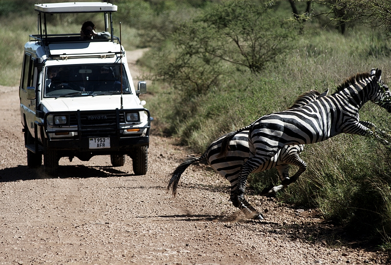 international volunteer abroad kenya wildlife safari culture tours-100