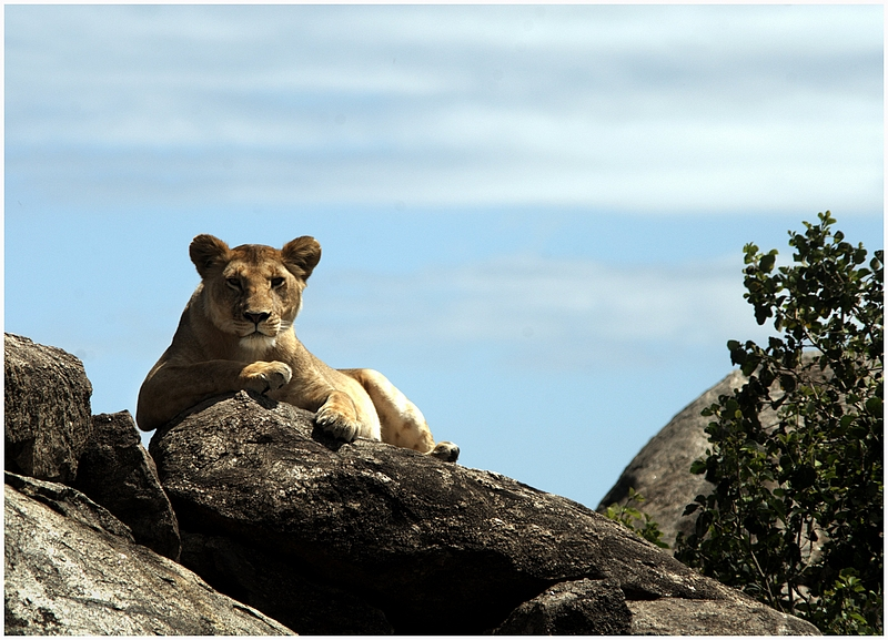 international volunteer abroad kenya wildlife safari culture tours-101