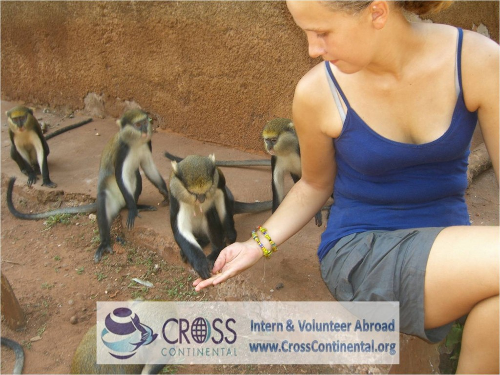 international internships and intern abroad an volunteer abroad Africa Ghana 27 wildlife work monkey sanctuary
