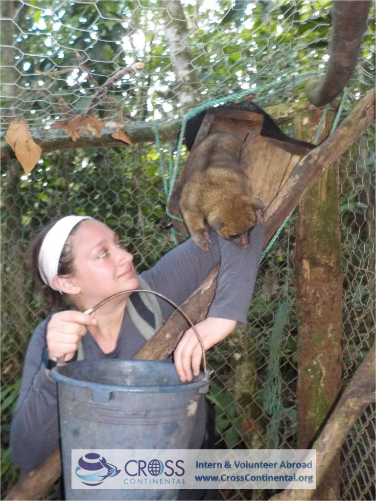 international internships volunteer abroad intern abroad Latin America Ecuador 140 tori wildlife internships abroad